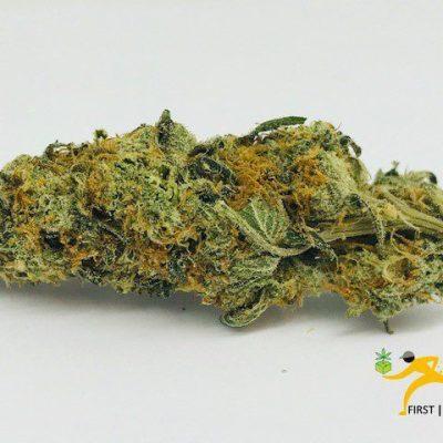 Cheese Marijuana Strain UK
