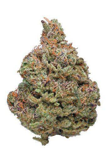 Buy Afghan Kush Cannabis Strain UK