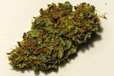 Buy Cannatonic Cannabis Strain UK