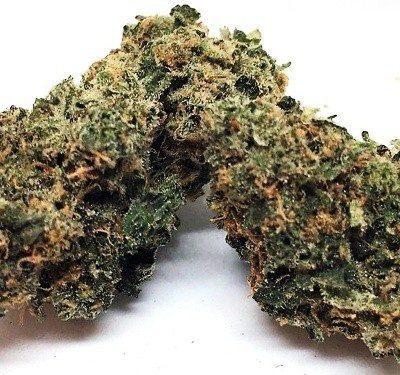 Cookie Glue weed Strain uk